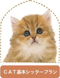 CATシッタープラン